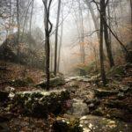 "Fototapet autoadeziv ""Traseu prin pădure"""