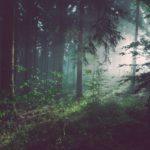 """Fototapet autoadeziv """"Zorii zilei în pădure"""""""