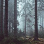 """Fototapet autoadeziv """"Pădure  încețoșată"""""""