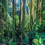 """Fototapet autoadeziv """"Pădure tropicală"""""""